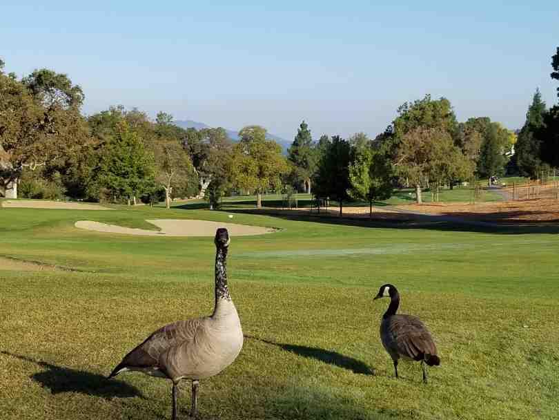 Amenities Golf Course 1
