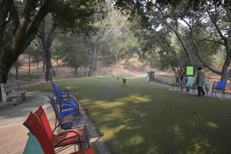 Del Valle Dog Park 1